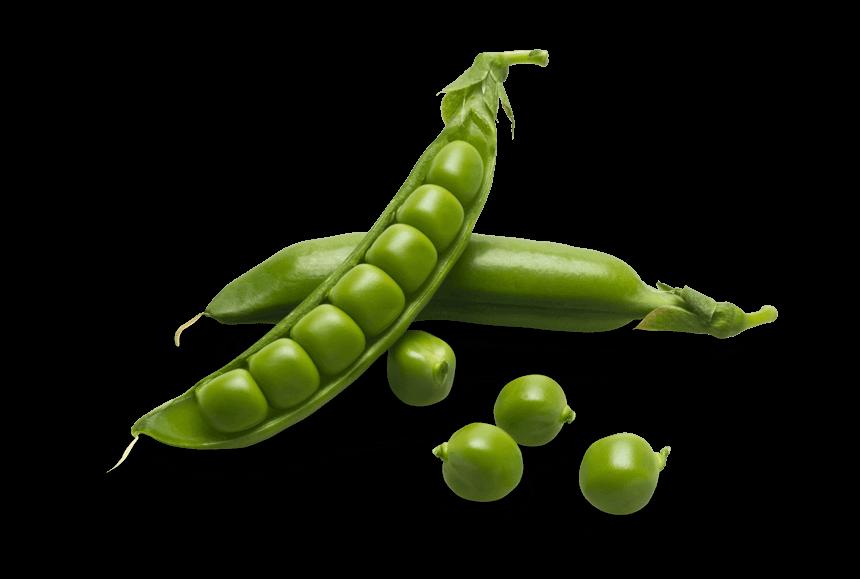 sugar snap peas חוות תקוע